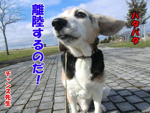 チャンスとティアラ+ココ-20130508-2-500.jpg