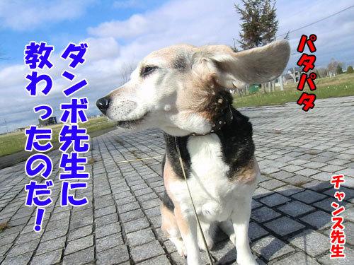 チャンスとティアラ+ココ-20130508-3-500.jpg