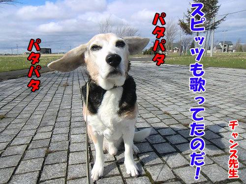 チャンスとティアラ+ココ-20130508-5-500.jpg