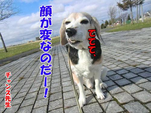 チャンスとティアラ+ココ-20130508-7-500.jpg