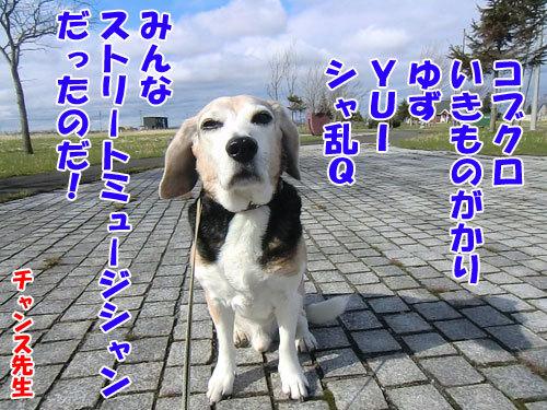 チャンスとティアラ+ココ-20130509-2-500.jpg