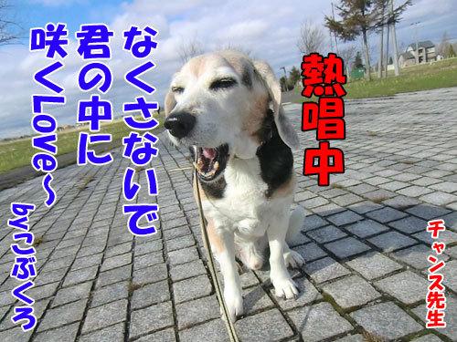 チャンスとティアラ+ココ-20130509-5-500.jpg