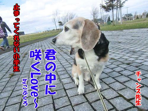 チャンスとティアラ+ココ-20130509-7-500.jpg