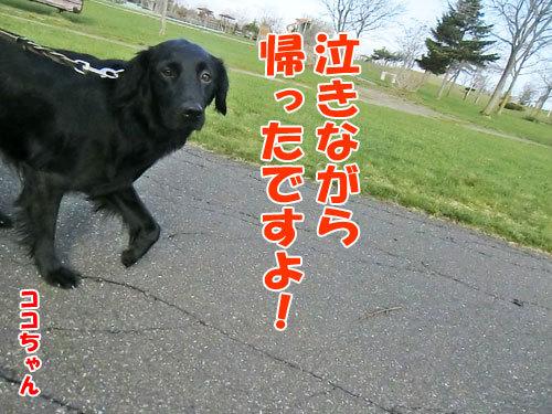 チャンスとティアラ+ココ-20130509-9-500.jpg