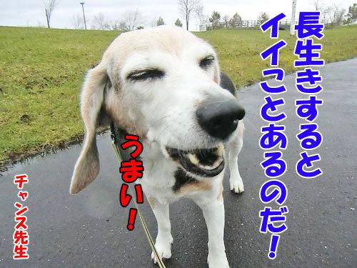 チャンスとティアラ+ココ-20130509beet2.jpg