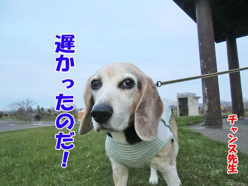 チャンスとティアラ+ココ-20130510-1-500.jpg