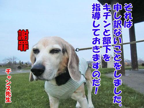 チャンスとティアラ+ココ-20130510-2-500.jpg