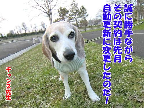 チャンスとティアラ+ココ-20130510-6-500.jpg