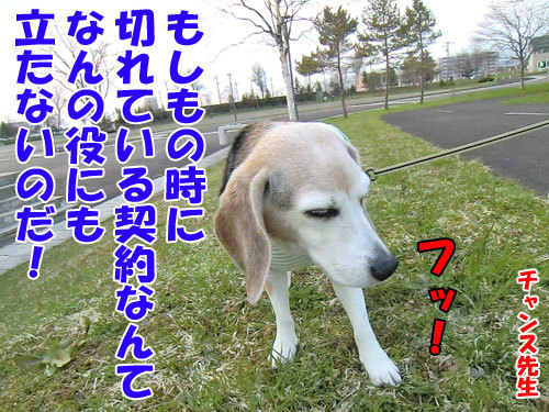 チャンスとティアラ+ココ-20130510-8-500.jpg