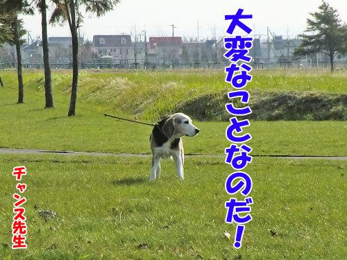 チャンスとティアラ+ココ-20130511-1-500.jpg