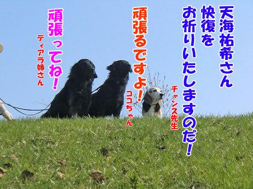 チャンスとティアラ+ココ-20130511-2-500.jpg