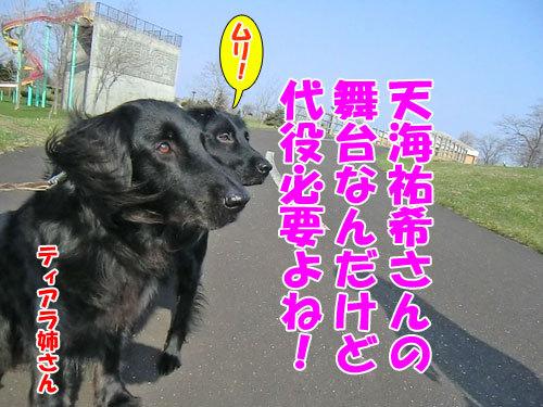 チャンスとティアラ+ココ-20130511-4-500.jpg