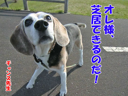 チャンスとティアラ+ココ-20130511-6-500.jpg