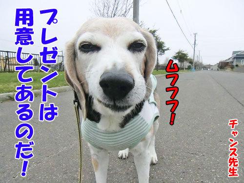 チャンスとティアラ+ココ-20130512-5-500.jpg