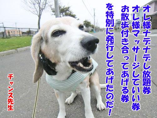 チャンスとティアラ+ココ-20130512-6-500.jpg