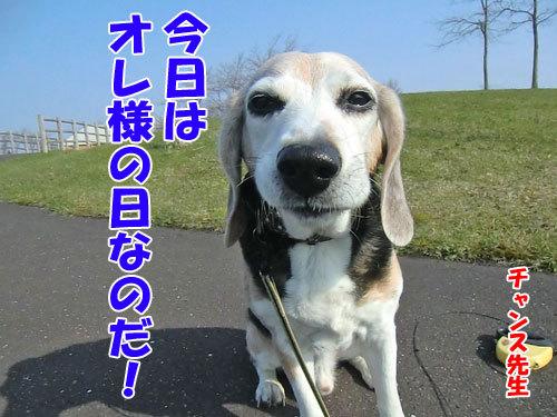 チャンスとティアラ+ココ-20130513-1-500.jpg