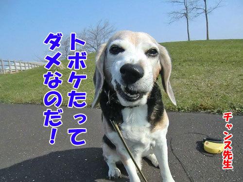 チャンスとティアラ+ココ-20130513-2-500.jpg