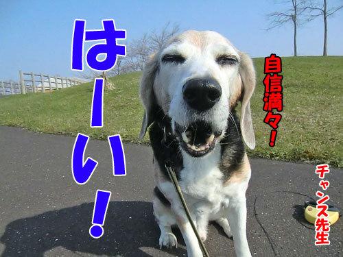 チャンスとティアラ+ココ-20130513-3-500.jpg