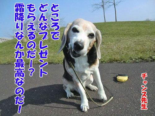チャンスとティアラ+ココ-20130513-4-500.jpg