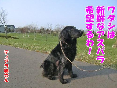 チャンスとティアラ+ココ-20130513-7-500.jpg