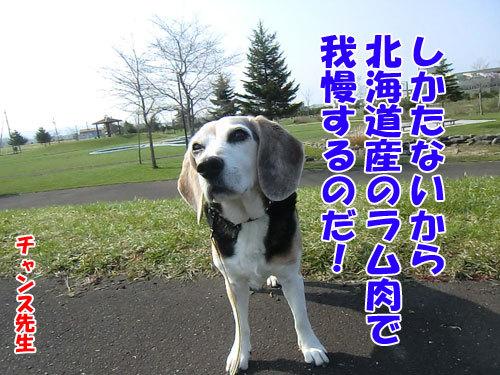 チャンスとティアラ+ココ-20130513-8-500.jpg