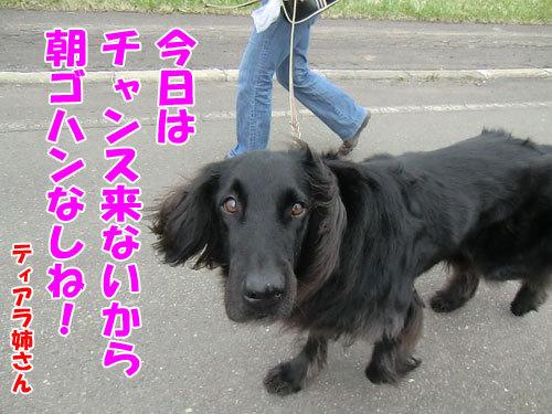 チャンスとティアラ+ココ-20130514-4-500.jpg