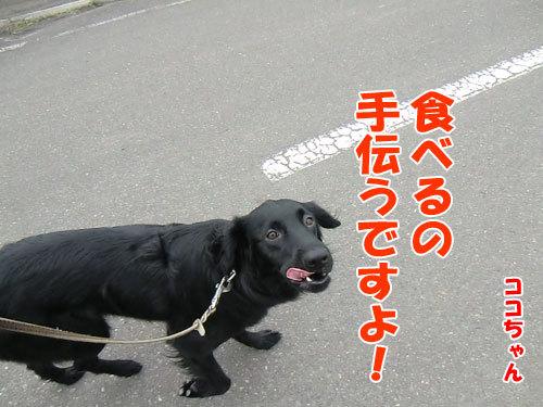 チャンスとティアラ+ココ-20130514-5-500.jpg
