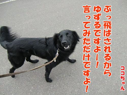 チャンスとティアラ+ココ-20130514-6-500.jpg