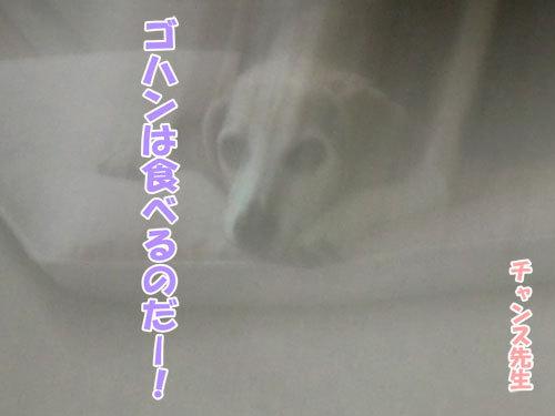チャンスとティアラ+ココ-20130514-7-500.jpg