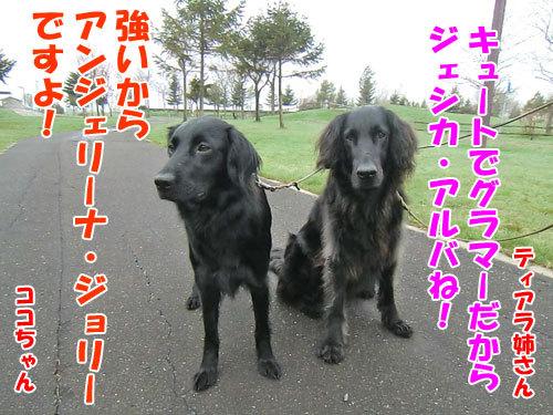 チャンスとティアラ+ココ-20120515-2-500.jpg