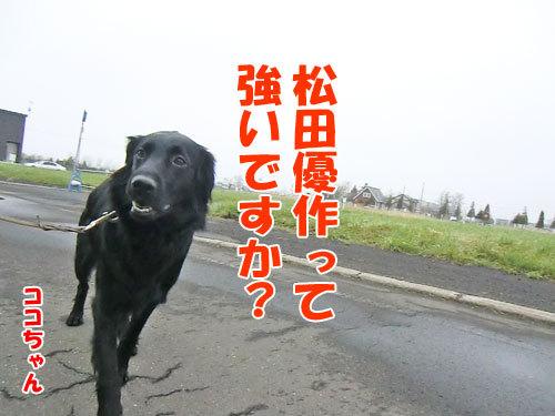 チャンスとティアラ+ココ-20120515-3-500.jpg