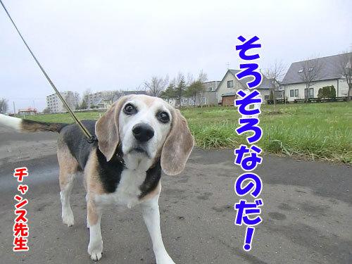 チャンスとティアラ+ココ-20120515-5-500.jpg