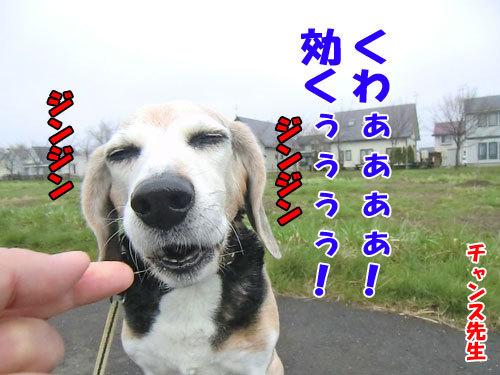 チャンスとティアラ+ココ-20120515-7-500.jpg