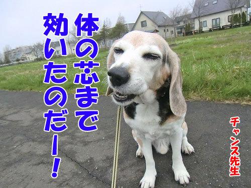 チャンスとティアラ+ココ-20120515-8-500.jpg