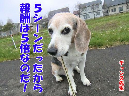 チャンスとティアラ+ココ-20120515-10-500.jpg