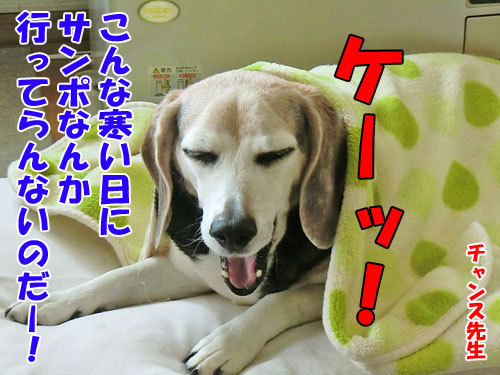 チャンスとティアラ+ココ-20130516-2-500.jpg