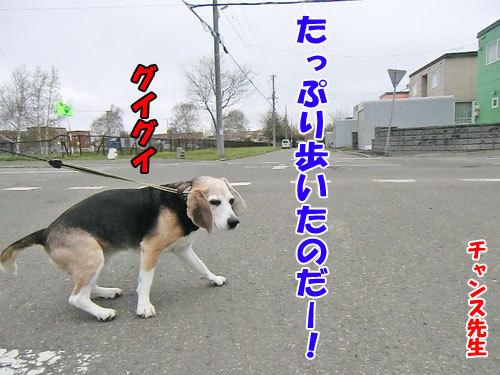 チャンスとティアラ+ココ-20130516-6-500.jpg