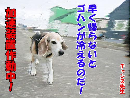 チャンスとティアラ+ココ-20130516-7-500.jpg