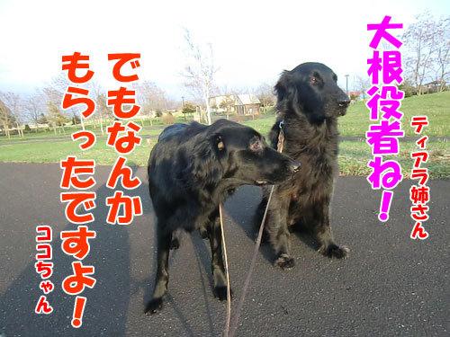 チャンスとティアラ+ココ-20130517-2-500.jpg