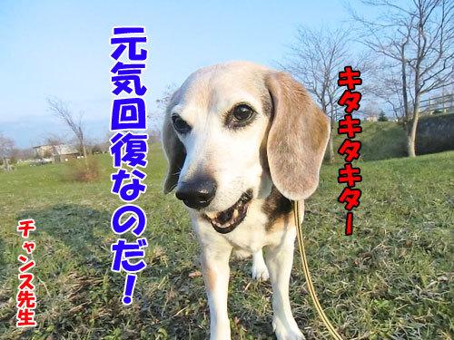 チャンスとティアラ+ココ-20130517-4-500.jpg