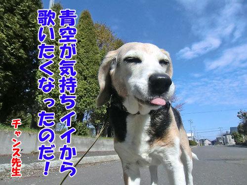 チャンスとティアラ+ココ-20130518-6-500.jpg