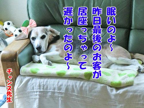 チャンスとティアラ+ココ-20130519-2-500.jpg