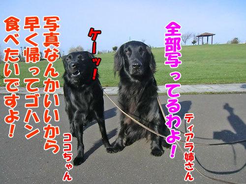 チャンスとティアラ+ココ-20130520-2-500.jpg