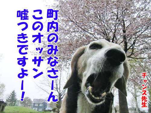 チャンスとティアラ+ココ-20130521-6-500.jpg