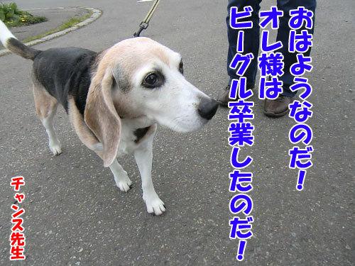チャンスとティアラ+ココ-20130522-4-500.jpg