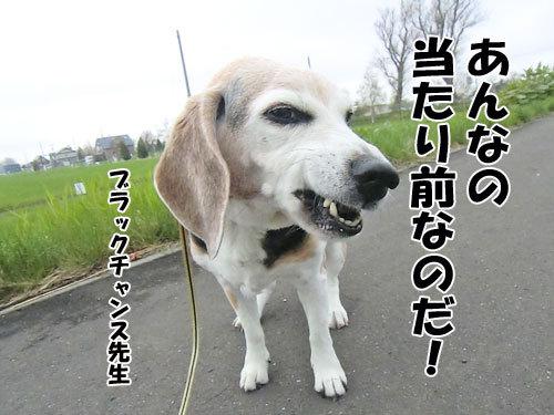 チャンスとティアラ+ココ-20130522-5-500.jpg