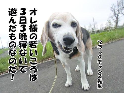 チャンスとティアラ+ココ-20130522-6-500.jpg