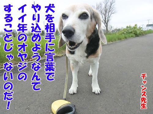 チャンスとティアラ+ココ-20130522-8-500.jpg