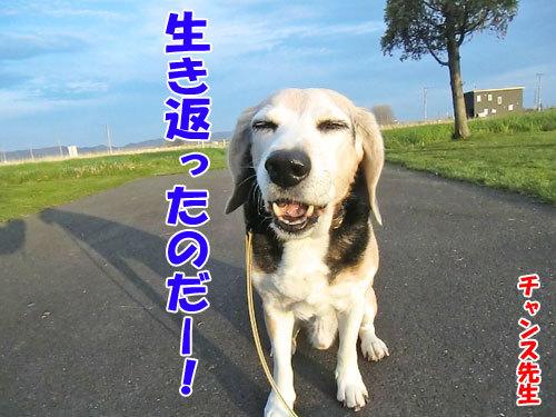 チャンスとティアラ+ココ-20130523-3-500.jpg