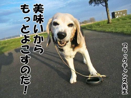 チャンスとティアラ+ココ-20130523-4-500.jpg